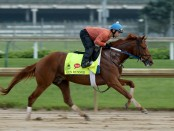 Gun Runner runs the track in a morning training before the 2016 Kentucky Derby at Churchill Downs
