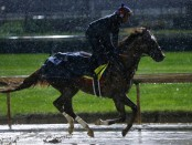 Irish War Cry runs the track in the rain during morning training before the 143rd edition of the Kentucky Derby at Churchill Downs
