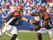 Former Cincinnati Bengals quarterback Matt Barkley hands off the ball to teammate Brian Hill against the Buffalo Bills