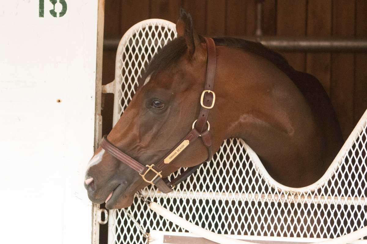 Former 2019 Kentucky Derby favorite Omaha Beach in their stall at the Kentucky Derby