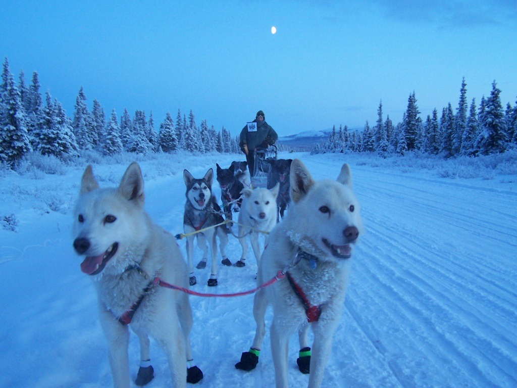 Mushers with his dogs